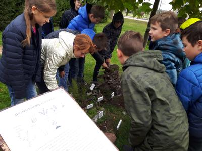 Augalų sistematiką mokomės sodelyje