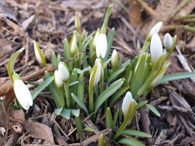 Pavasario ženklai ugdymosi sode
