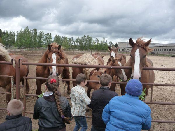 """Netradicinė pamoka 5 klasėje tema """"Arkliai"""""""