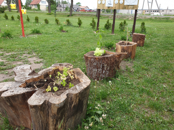 Ugdymosi sode – daržovės kelmeliuose