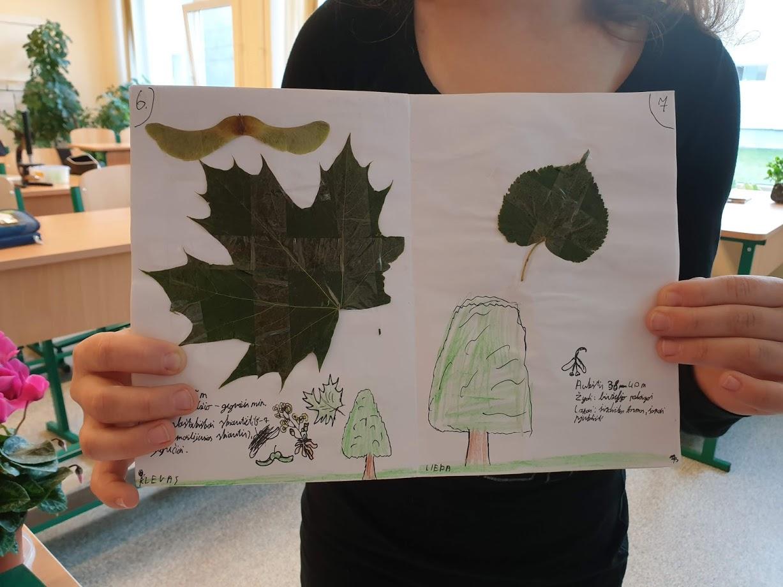 Medžių pažinimas